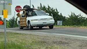 Musisz przewieźć byka, ale nie masz odpowiedniej ciężarówki? Jest na to sposób!
