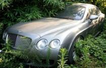 Kolekcja luksusowych samochodów gnije w krzakach [FOTO]