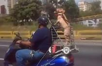 Pies na motocyklu przyjacielem człowieka